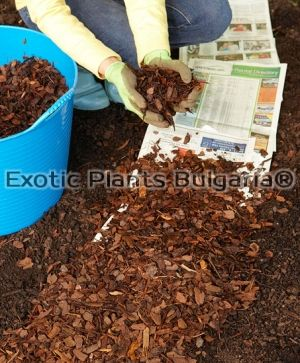 Blueberrymulch - middle  M -50 ltr