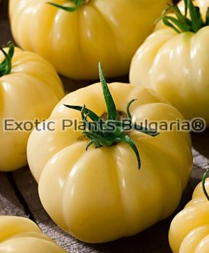 Tomato Great White Beefsteak