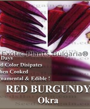 ORGANIC RED BURGUNDY Okra  - 0.5 gr